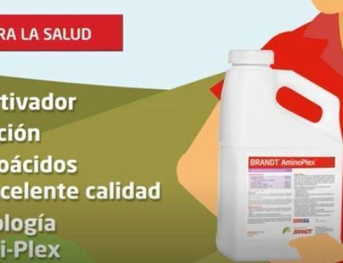 BRANDT AminoPlex, nuestro bioactivador que reduce el estrés de la planta y aumenta la producción