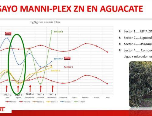 Reducción de abortos y aumento del calibre final en aguacate tras aplicación de BRANDT Manni-plex Zn