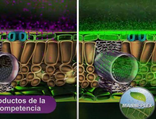 BRANDT Manni-Plex: nutrientes de absorción inmediata que ayudan a mejorar el rendimiento de la planta