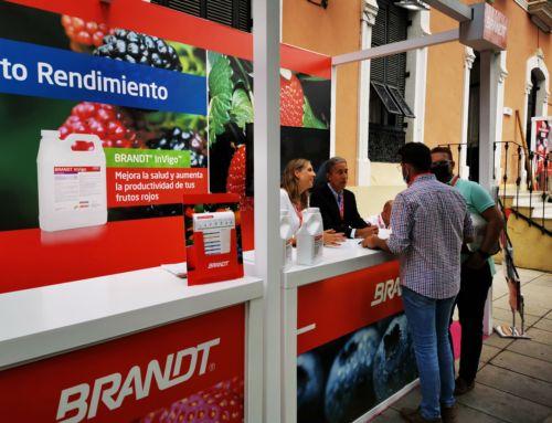 BRANDT presenta en el Congreso de Frutos Rojos de Huelva ManniPlex Calcio, que retrasa hasta en 5 días la fecha de aparición de hongos postcosecha en fresa